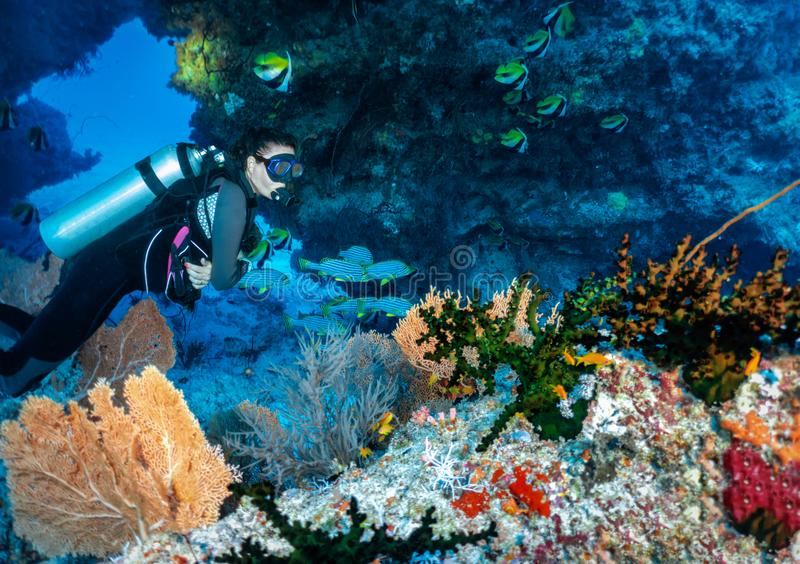 Female scuba diver explores a coral reef in the Indian Ocean, Maldives stock images