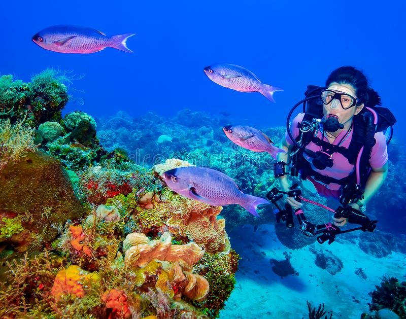 Female Scuba Diver with fish over Coral Reef stock photos
