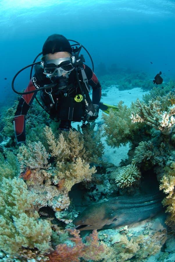 Female scuba diver observing a Giant moray eel