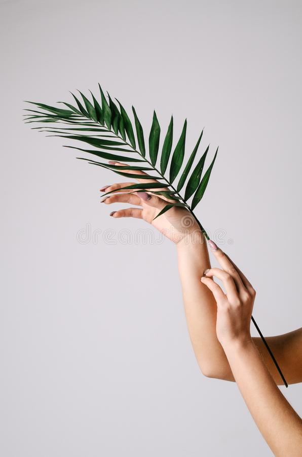 Female sensual hands holding a palm leaf on a white background royalty free stock image
