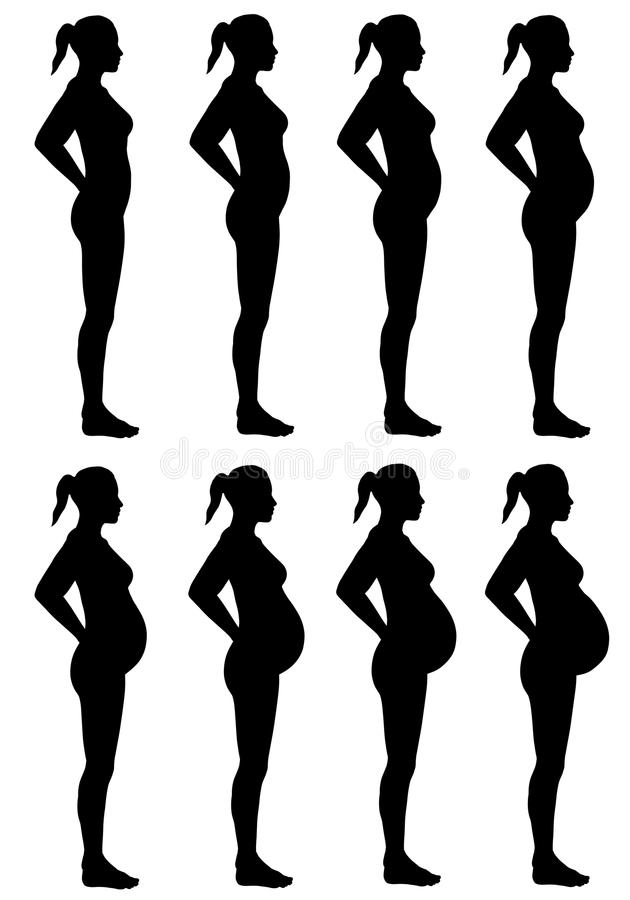 Female Silhouette Stages of Pregnancy vector illustration