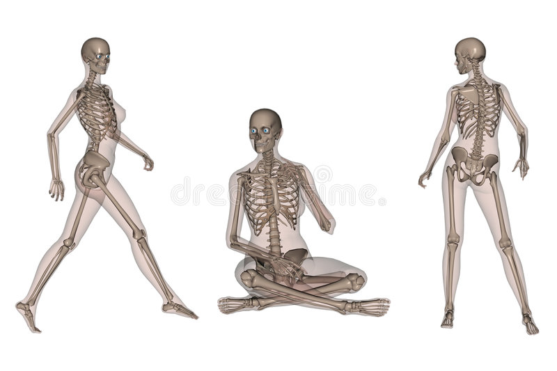 Female Skeletal Body stock illustration
