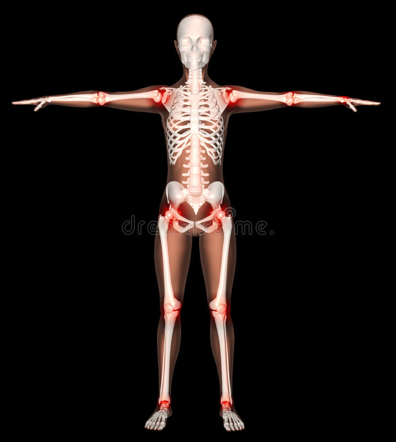 Download Female Skeleton With Joints Highlighted Stock Illustration - Image: 19579016