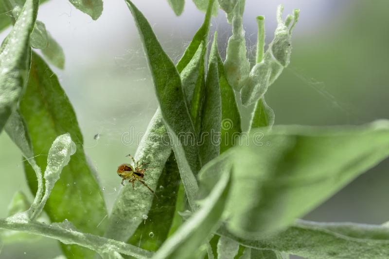 Spider is on walking on its web stock images