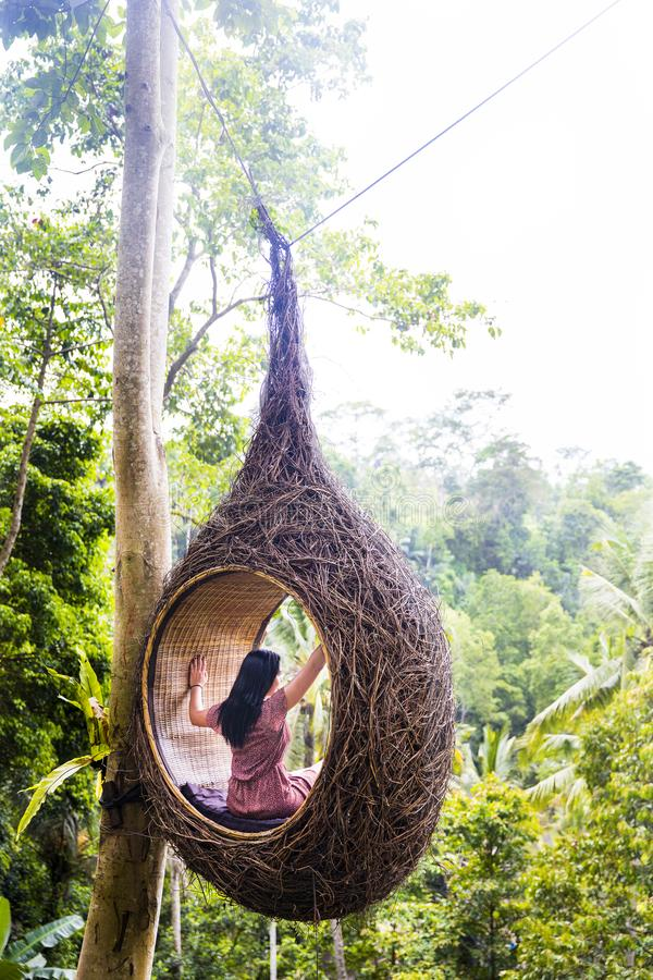 A female tourist is sitting on a large bird nest on a tree at Bali island. Indonesia stock photo
