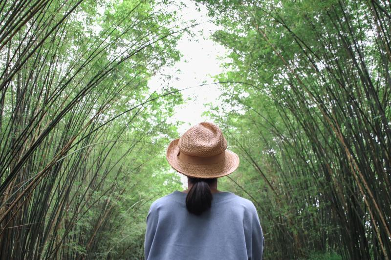 Female tourists viewing tunnel bamboo tree and walkway background. stock photos