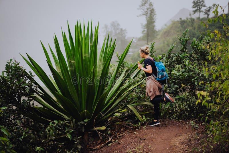 Female traveler amire huge endemic agave plant on Santo Antao Cape Verde.  stock photo