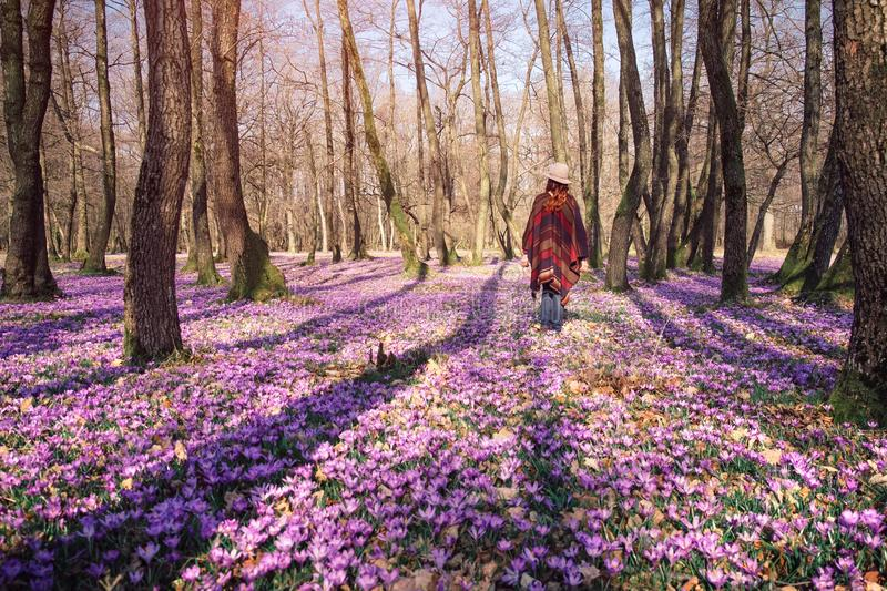 Blooming nature, crocuses, young traveler. Female traveler in a colorful poncho, shot from back in a Spring forest, driven by awakened blooming wildlife thinking stock photos