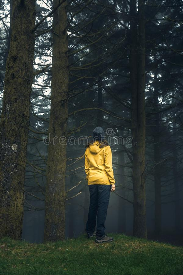 Traveler looking to a forest stock photography