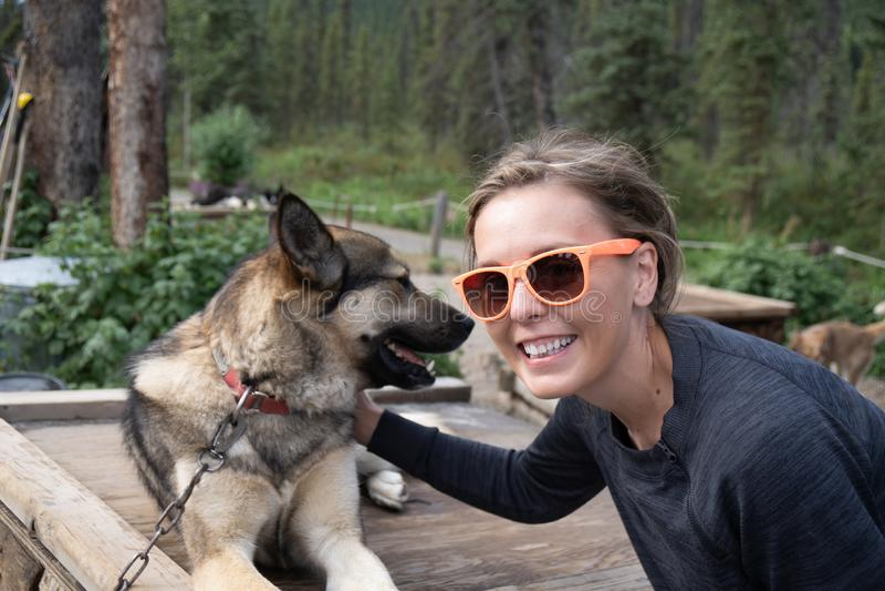 Female traveler pets an Alaskan husky sled dog in Denali National Park royalty free stock photography