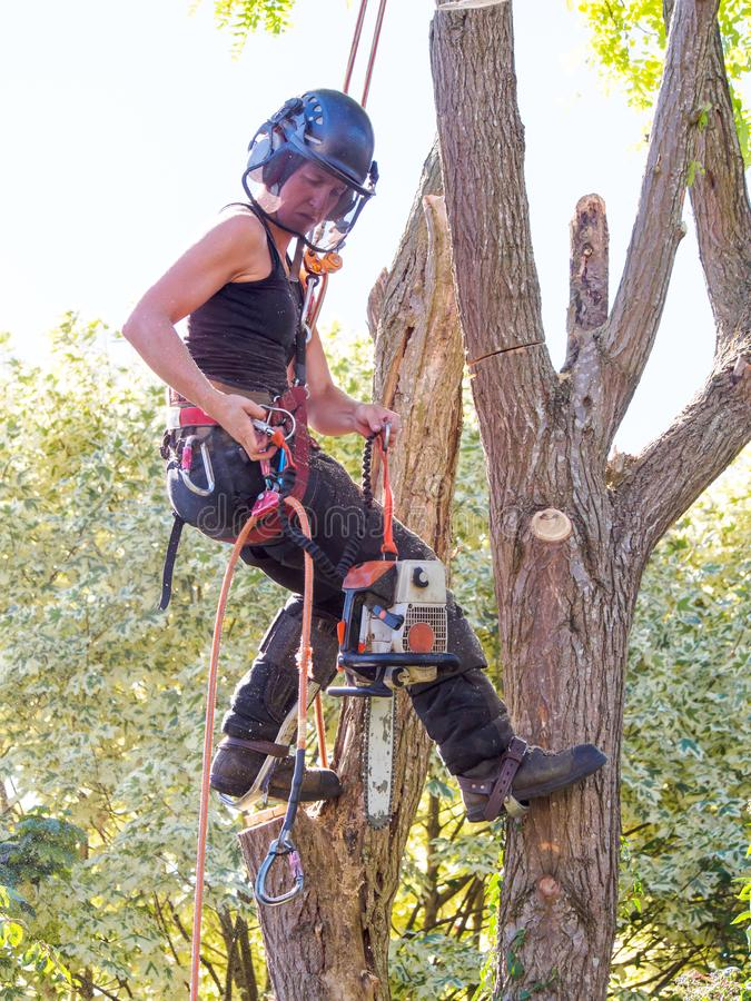 Female Tree Surgeon royalty free stock photography