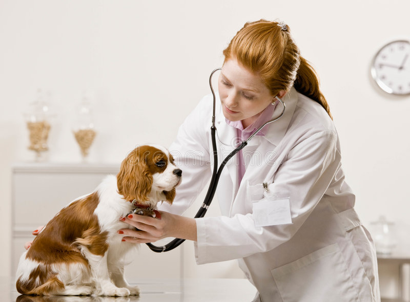 Female vet cares for dog stock photo