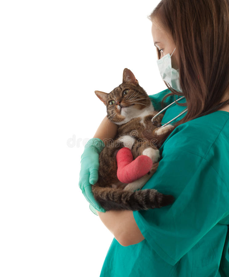 Download Female Vet With Cat In Surgery Stock Photo - Image of broken, dress: 14379484