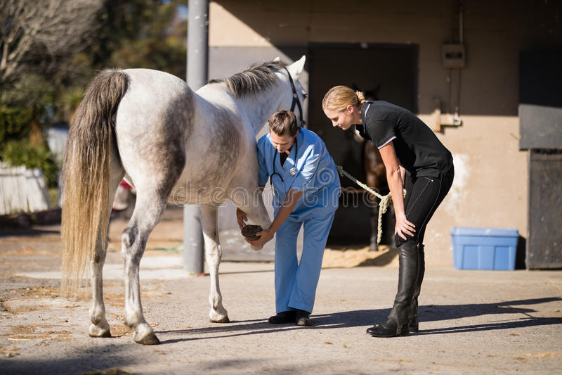 Female vet discussing with jockey while examining horse hoof. At barn royalty free stock photo