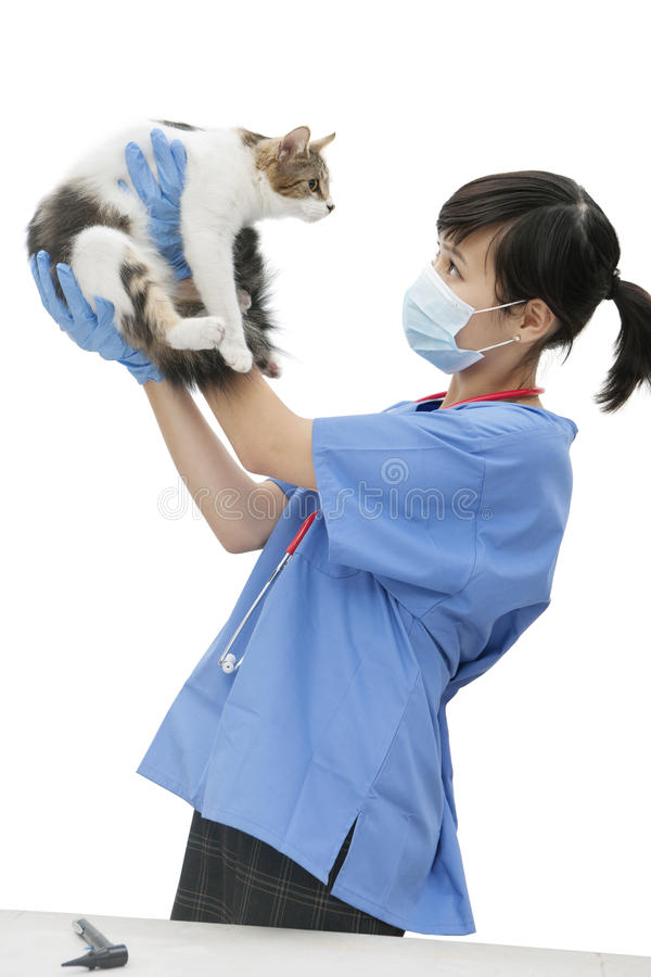 Female veterinarian holding up cat against white background royalty free stock photography