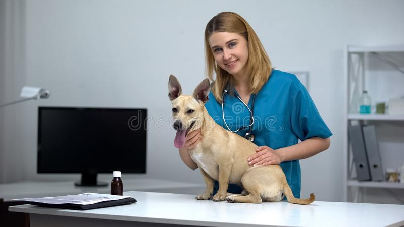 Female veterinarian with stethoscope stroking cute dog animal clinic examination royalty free stock photography