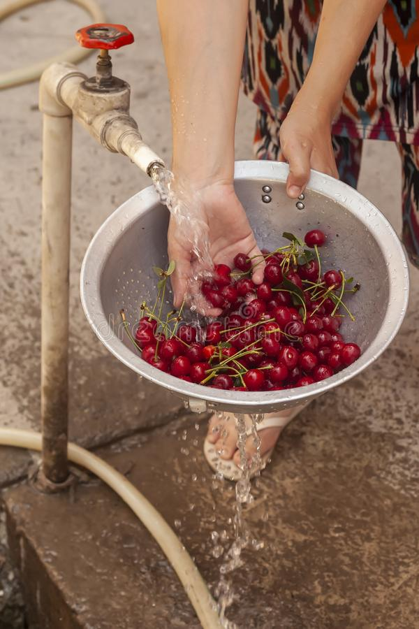 Female washing bowl of fresh cherries with water royalty free stock images