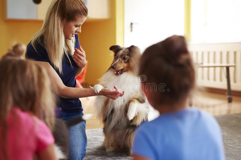 Female woman working with her dog during therapy dog. Female women working with her dog during therapy dog in the preschool stock photography