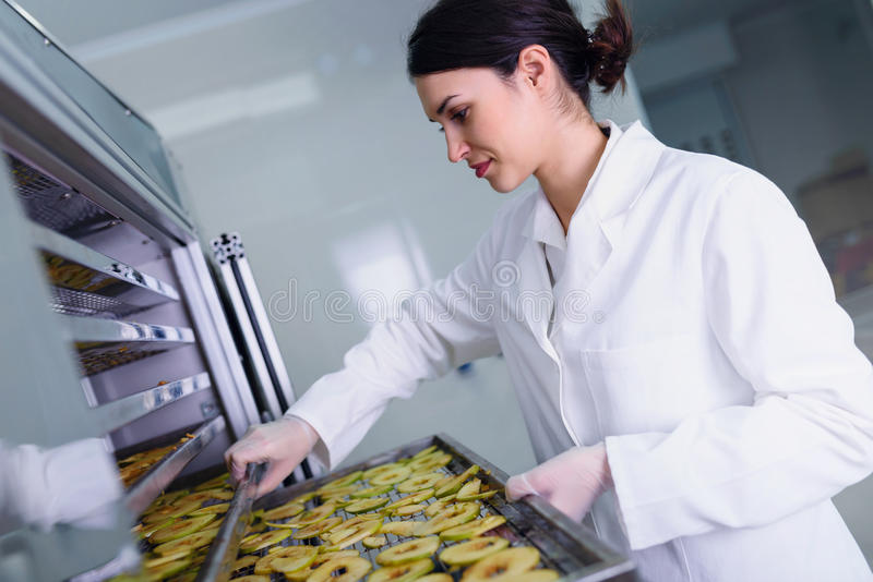 Female worker on food dryer dehydrator machine royalty free stock photography