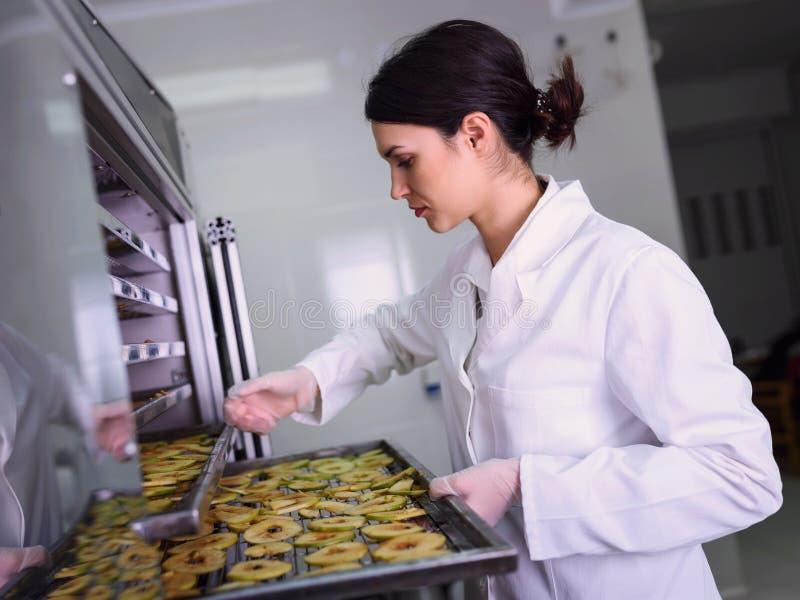 Female worker on food dryer dehydrator machine royalty free stock image