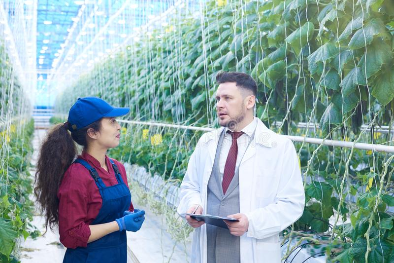 Female Worker Talking to Scientist in Modern Plantation stock image