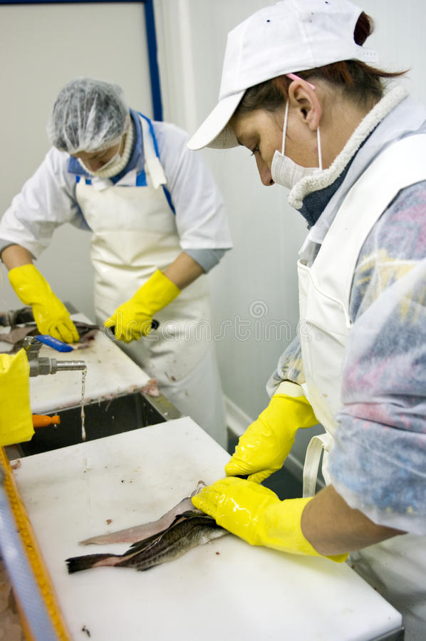 Female workers filleting fish royalty free stock photography