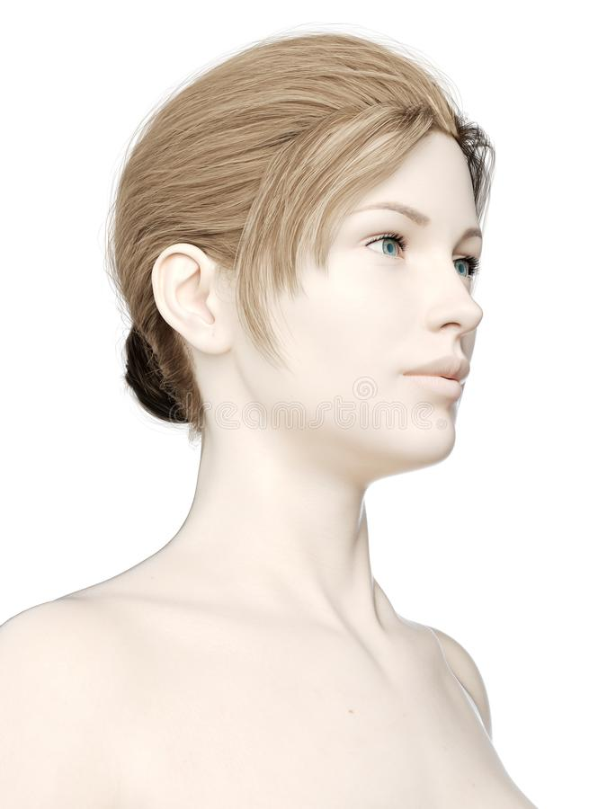 A females head. 3d rendered medically accurate illustration of a females head stock illustration