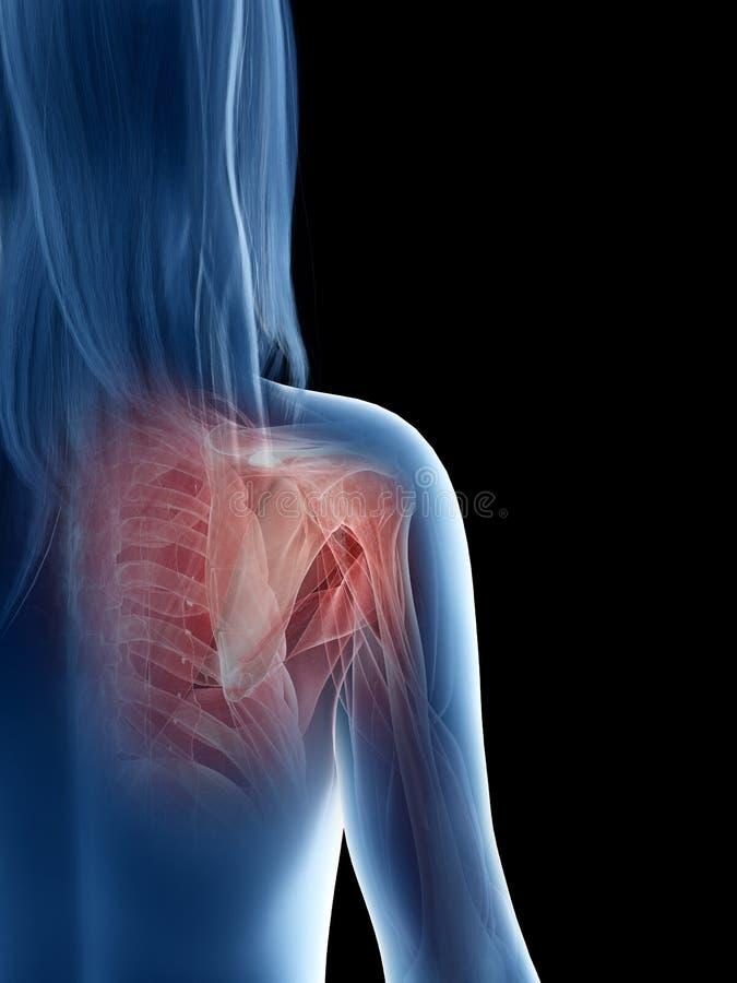 A females shoulder muscles stock illustration