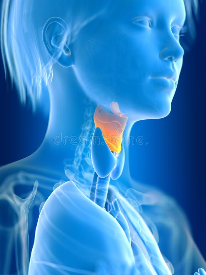 a females small intestine vector illustration