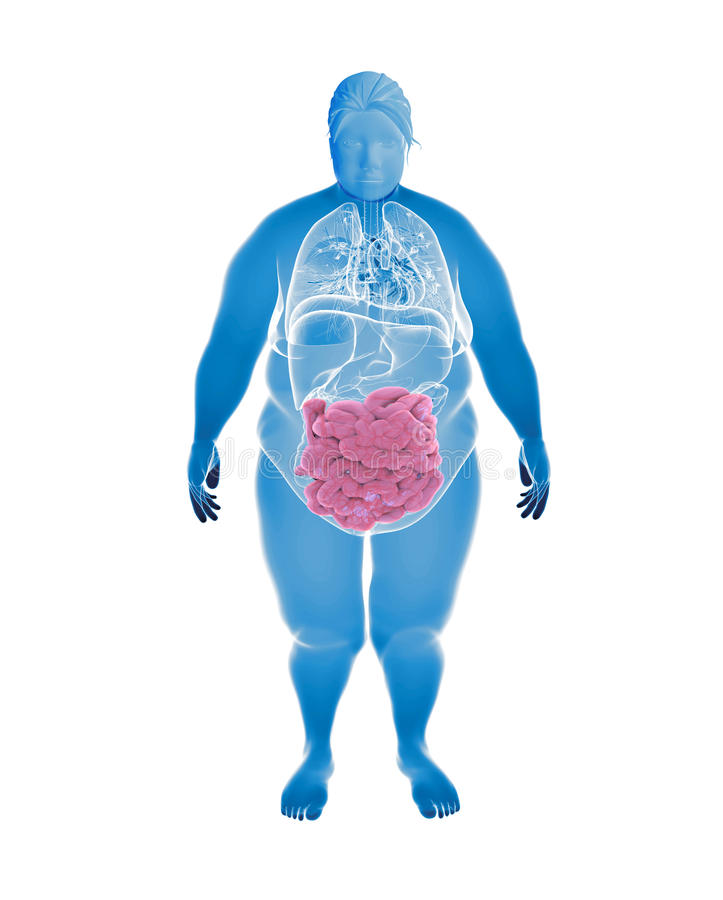 Femelle de poids excessif avec l'intestin grêle hihglighted illustration libre de droits