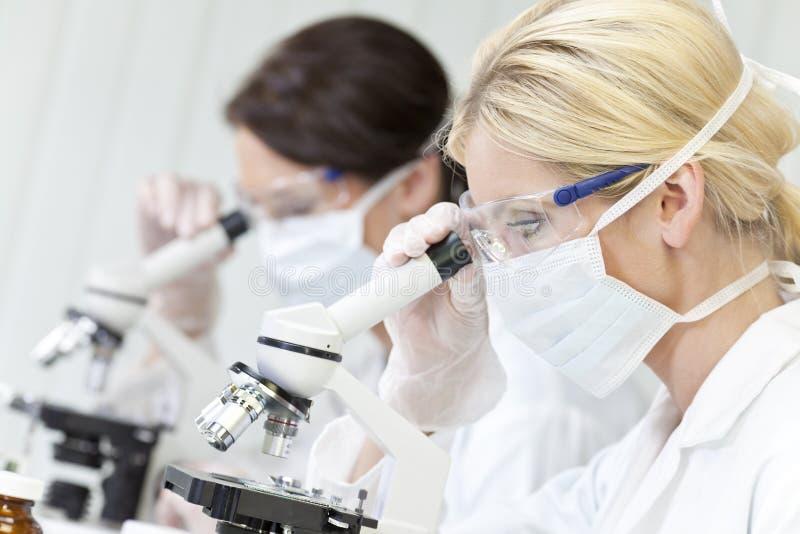 Femelles, scientifiques sur des microscopes dans le laboratoire photo stock