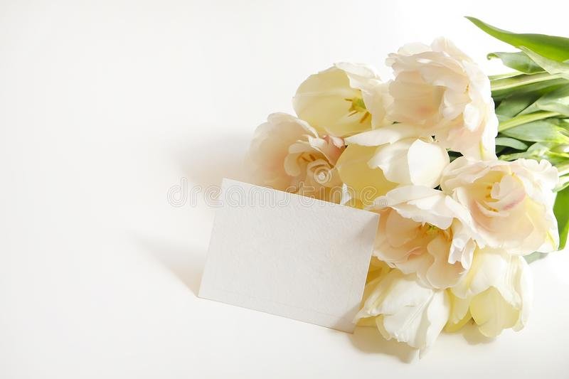 Beautiful spring holidays flowers arrangment. Bunch of white tulips in festive composition, copy space for text, white background. royalty free stock images