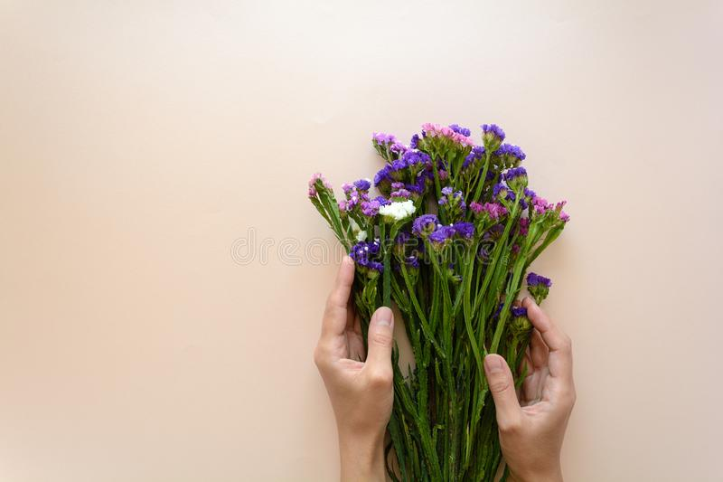 Feminine hands holding bouquet of sea lavender flowers Limonium on pink background. Top view. Copy space stock photos