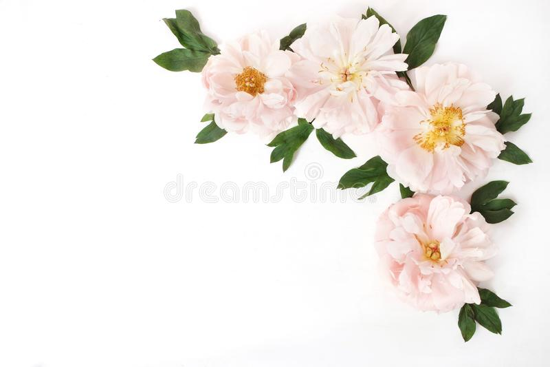 Feminine styled stock photo with pink peony flowers and leaves isolated on white background. Flat lay, top view. Floral stock images