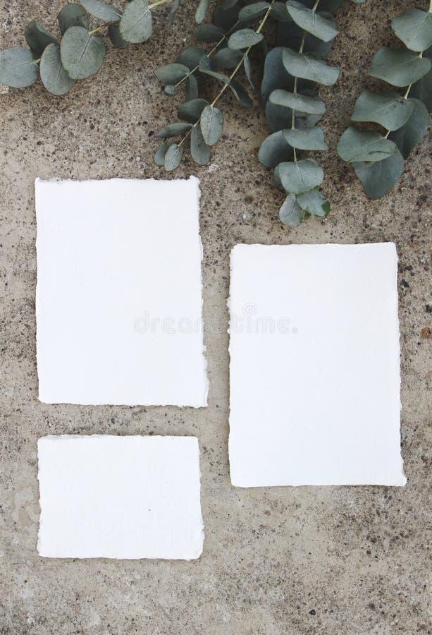 Feminine vertical wedding, birthday mock-up scene. Blank craft cotton paper greeting cards and green Eucalyptus leaves stock photo