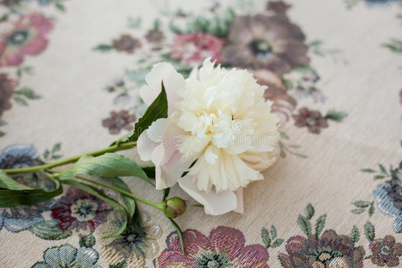 Feminine wedding or birthday table composition with white peonies on old vintage table royalty free stock photos