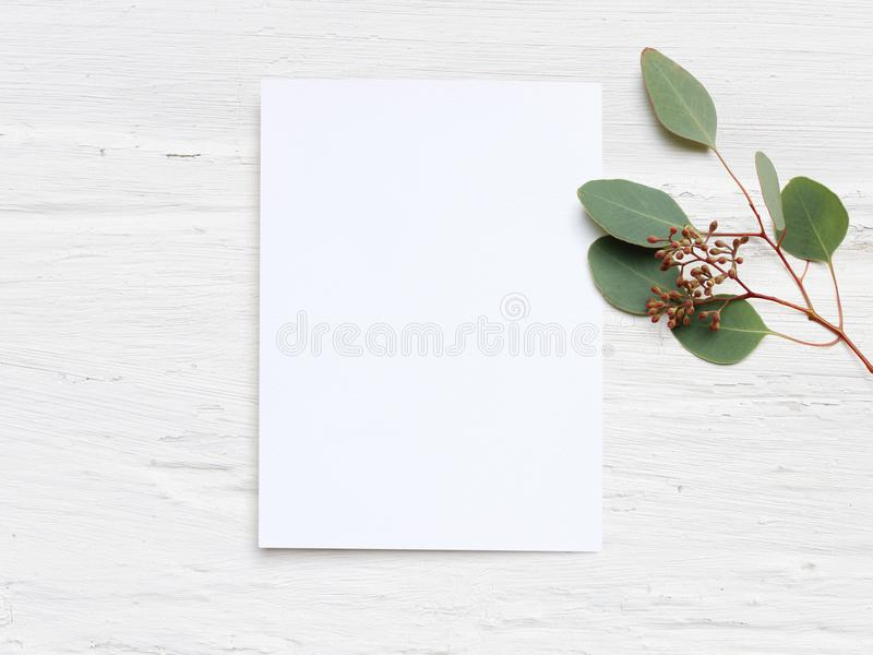 Feminine wedding desktop mock-up with blank paper card and Eucalyptus populus branch on white shabby table background stock photo