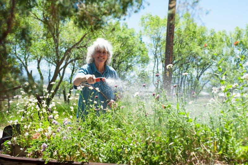 Femme aîné arrosant son jardin photos libres de droits