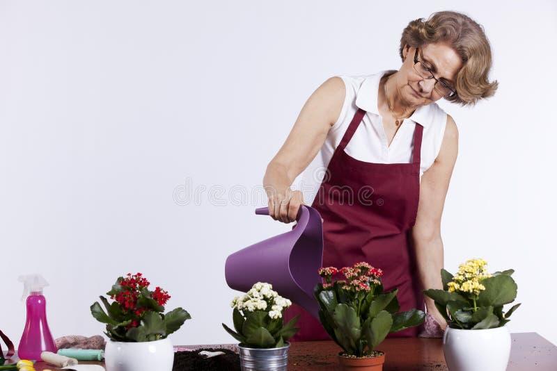 Femme aînée plantant des fleurs photos stock