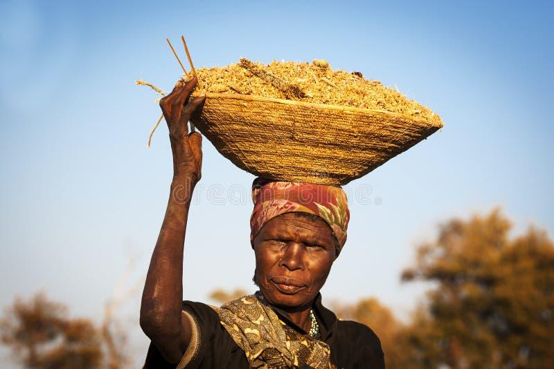 Femme africaine équilibrant un panier avec des céréales dans sa tête dans la bande de Caprivi, Namibie image libre de droits