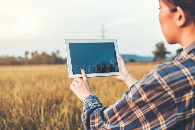 Femme agricole agricole futée de technologie et d'agriculture biologique à l'aide du comprimé de recherches et étudiant le dévelo photographie stock libre de droits