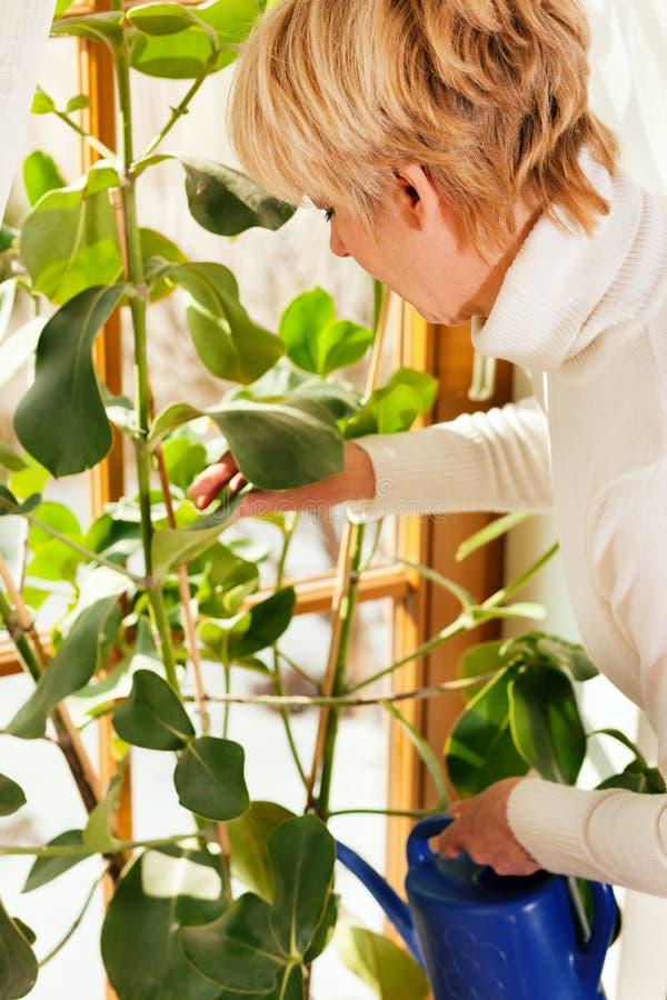 Femme arrosant les fleurs à la maison photographie stock