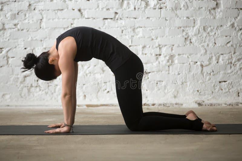 Femme attirante de jeune yogi dans la pose de chat, fond blanc de grenier photos libres de droits