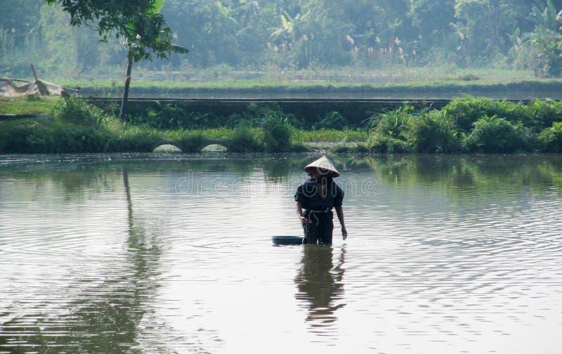 Femme au Vietnam utilisant les chapeaux triangulaires traditionnels de paume de paille image libre de droits
