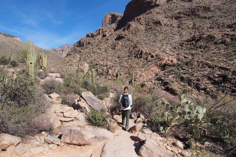 Femme augmentant la traînée de canyon de Pima, Arizona image libre de droits