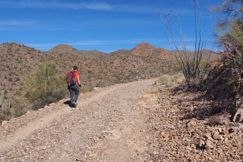 Femme augmentant le Roi Canyon Trail, Arizona photographie stock libre de droits