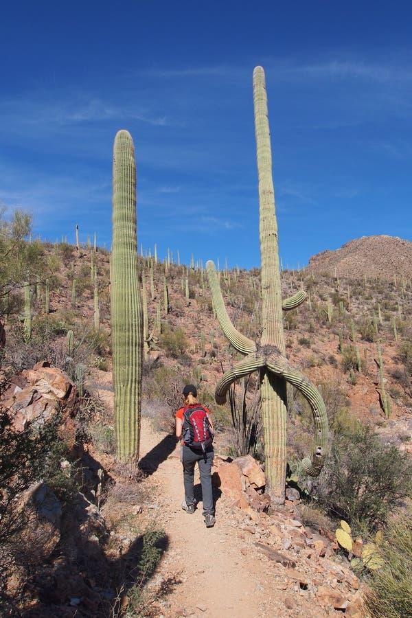 Femme augmentant le Roi Canyon Trail, Arizona photographie stock