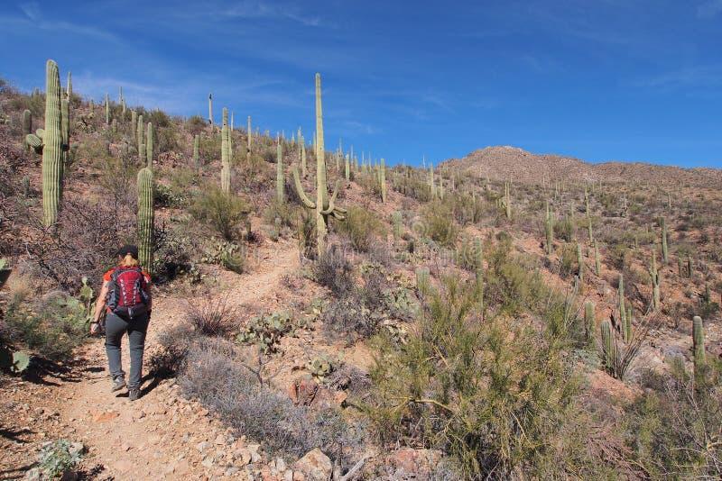 Femme augmentant le Roi Canyon Trail, Arizona images libres de droits