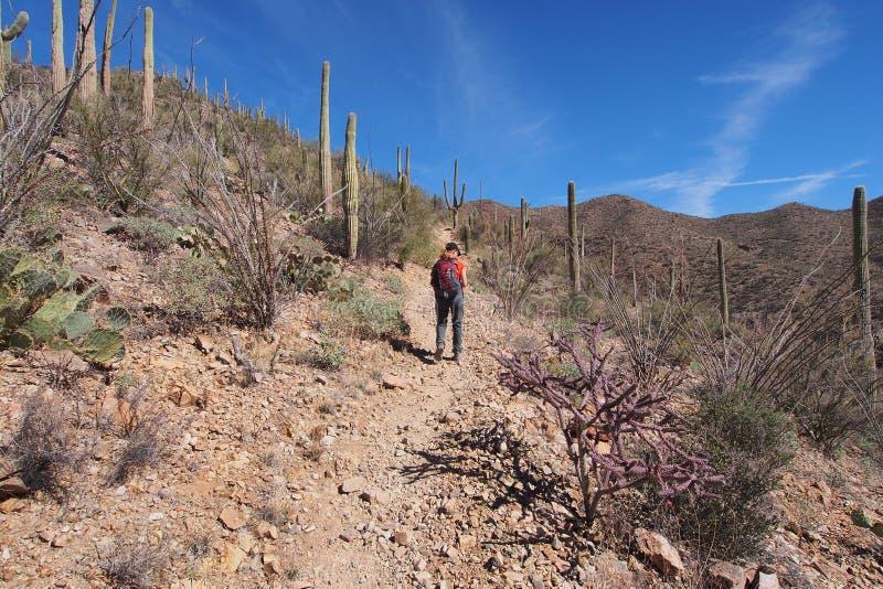 Femme augmentant le Roi Canyon Trail, Arizona image libre de droits