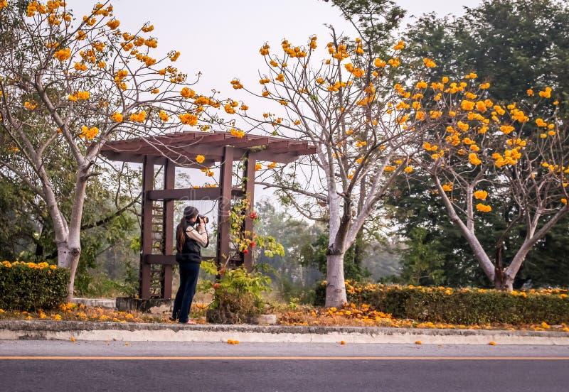 Femme avec l'appareil-photo prenant des photos des arbres de fleurs image libre de droits